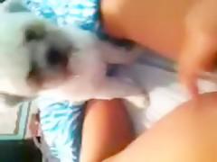 chinitas viciosas y perros salidos