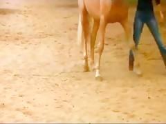 Alongamento anal horse 03
