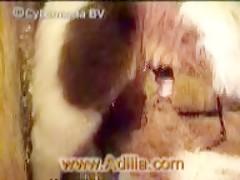 Un coño mojado para el animal