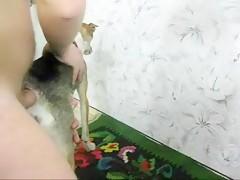 Perro gordo con madura