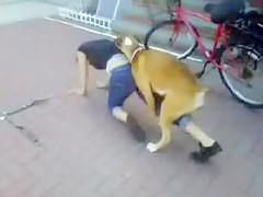 el perrito de monica