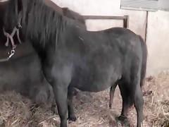 Desvirgada por el caballo