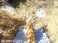 Webcam Penelope dog show