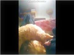 Webcam dogshow