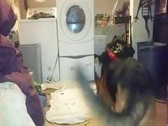 Chupa hombre mientras el perro empuja