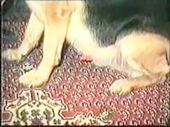Ensartada por el perro