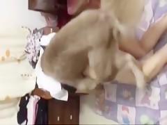 De cuero para mi can