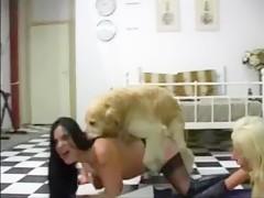 mamada a mi perro