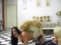 dog vs Sandor