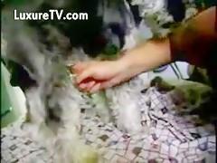 Un perro con suerte tiene sexo